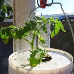 Vanlife - Paul willful tomato